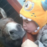 My daughter having a cheeky smooch with Finn her adopted donkey.